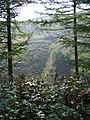 Base of Mynydd Moelgeila, Garw Forest - geograph.org.uk - 985724.jpg
