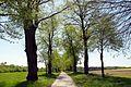 Baumbestand der Schnellenberger Allee (Gemarkung Oedeme) 01.jpg