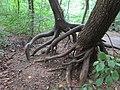 Baumhilfe.jpg