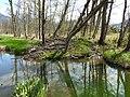 BeaverHaidSaalfelden 11.jpg
