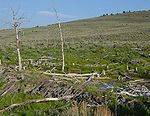 Beaver dam in Fossil Butte NM-750px.JPG