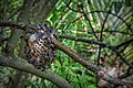Bee comb at our home.jpg