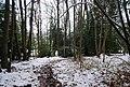 Beech Wood, Groombridge - geograph.org.uk - 1151422.jpg