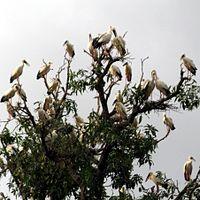Beohar Sarovar Migratory Birds.JPG