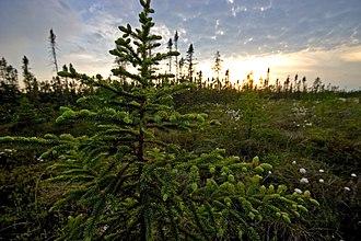 Big Bog State Recreation Area - Big Bog State Recreation Area