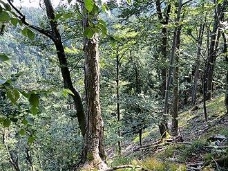 Vrhnika - Big Drnovica Collapse Sinkhole