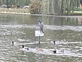 Big bird, Városligeti lake, 2015 Budapest.jpg