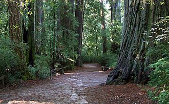Santa Cruz County, California - Image: Bigbasinredwoods