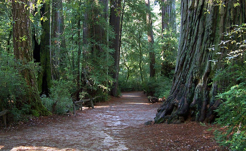 800px Bigbasinredwoods Best Cheap Holiday Escapes Near East Bay