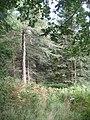 Birks Plantation - geograph.org.uk - 955715.jpg