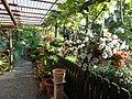 Blütentraum - panoramio (1).jpg
