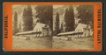 Black's Hotel, from Robert N. Dennis collection of stereoscopic views.png
