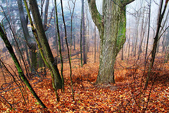 Black River (St. Clair County) - Looking down into the Black River Valley on a foggy morning.