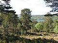 Black Wood of Rannoch - geograph.org.uk - 829714.jpg