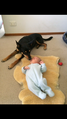 Black and tan kelpie with baby.PNG