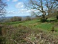 Blackdown Hills , View over the Hedgerow - geograph.org.uk - 1243125.jpg