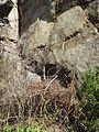 Blansko, blanenské bouldery (4).JPG
