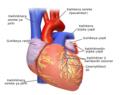 Blausen 0451 Heart Anterior ku.png