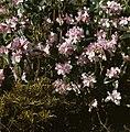 Bloemen, planten, Bestanddeelnr 254-7539.jpg