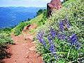 Blooms on Black Butte - panoramio.jpg