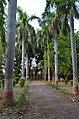 Bodhgaya (8717524450).jpg