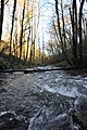 Bolintxu ibaia - Río Bolintxu (9) (40652441774).jpg
