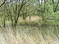 Bomen in water Biesbos.JPG