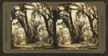 Bonaventure Cemetery, Savannah, Ga, from Robert N. Dennis collection of stereoscopic views.png