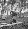 Bosbewerking, arbeiders, boomstammen, bomen vellen, Bestanddeelnr 251-9305.jpg