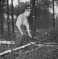 Bosbewerking, arbeiders, boomstammen, gereedschappen, Bestanddeelnr 251-9148.jpg