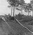 Bosbewerking, arbeiders, boomstammen, vervoeren, dieren, paarden, Bestanddeelnr 251-8488.jpg
