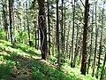 Bosque de Oma (17).JPG