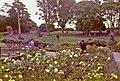 Botanic Garden, Undercliff, Ventnor, Isle of Wight - geograph.org.uk - 682087.jpg