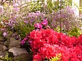 Botanischer Garten - Fruehling im Tropenhaus (Spring in the Tropical House) - geo.hlipp.de - 35118.jpg