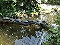 Botanischer Garten 24.07.2012 - panoramio (5).jpg