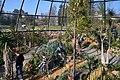 Botanischer Garten der Universität Zürich nach Umbau - 'Tiefland' 2014-03-08 14-42-09.JPG