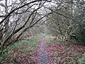 Bramshot Lane - geograph.org.uk - 1614668.jpg