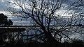Branches (34043861773).jpg