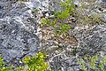 Breccia-filled dissolution pit (Sandy Point Northeast roadcut, San Salvador Island, Bahamas) 1 (16282304759).jpg