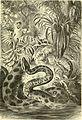 Brehms Tierleben; allgemeine kunde des thierreichs. Mit 1910 abbildungen im text, 11 karten und 180 tafeln in farbendruck und holzschnitt. (1893) (20225455260).jpg