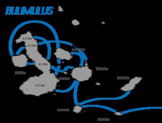 <i>Bulimulus</i> genus of molluscs