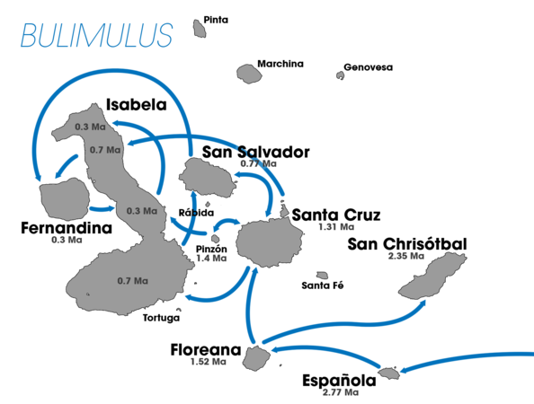 Bulimulus Colonization of Galapagos.png