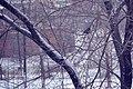 Bullfinch (18544397).jpeg