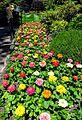 Butchart Gardens, Victoria, British Columbia, Canada (29110682182).jpg