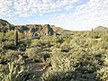 Butcher Jones Trail - Mt. Pinter Loop Trail, Saguaro Lake - panoramio (60).jpg