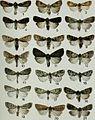 Butterflies and moths of Newfoundland and Labrador - the macrolepidoptera (1980) (20484848726).jpg