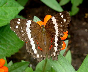 Description de l'image Butterfly House 5.JPG.