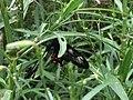 Butterfly Park Bannerghatta National Park.jpg