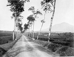 Tasikmalaya Regency - A road towards Tasikmalaya with Mount Galunggung seen in the distance, 1920–1940.