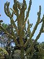 Cactus & Succulents (183438410).jpg